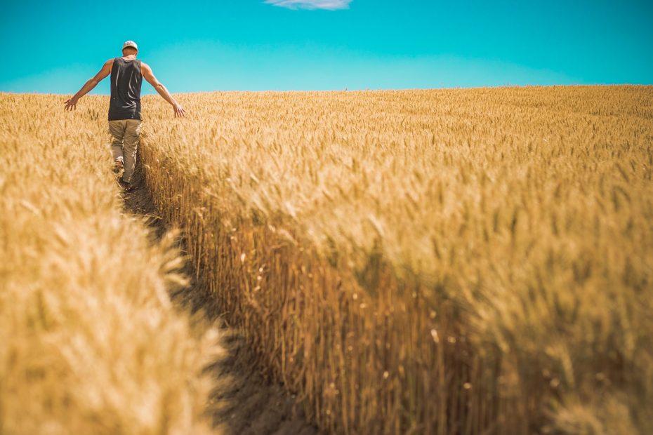 Finanziamenti e Contributi a Fondo Perduto Agricoltura